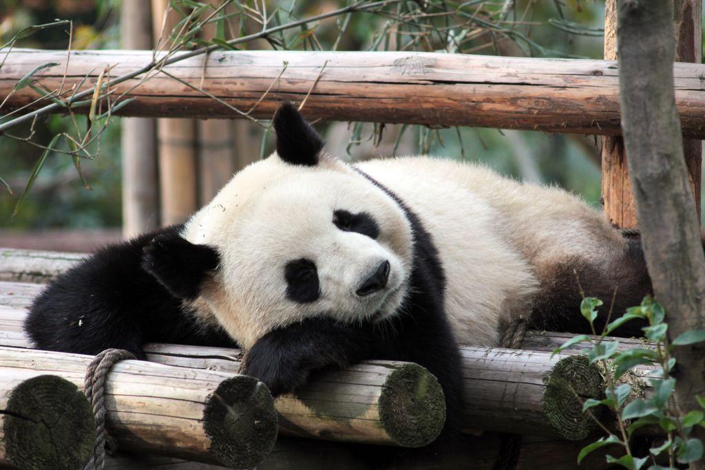 Le zoo de beauval l heure du d veloppement durable for Chambre zoo de beauval