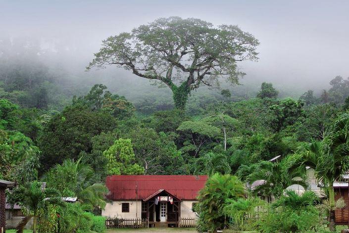 l 39 arbre de l 39 ann e 2015 les arbres remarquables. Black Bedroom Furniture Sets. Home Design Ideas